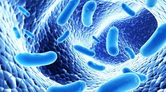 bacterial-img